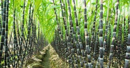 list of agro based industries