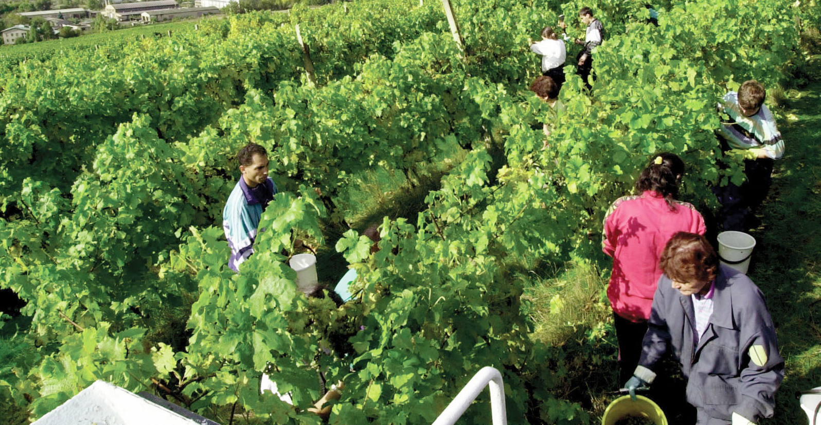 information on agro based industries Agriculture is one of the major raw material providing sector for major industries  like paper, sugar, textile, fertilizers, chemical, edible oil, etc, agro-based.