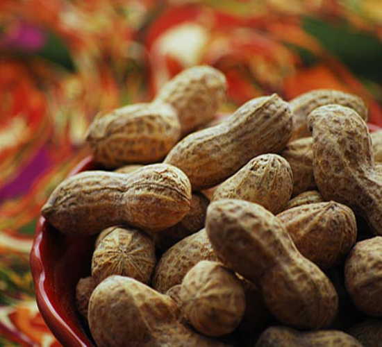 Groundnut Cake Wholesale